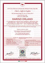 Marino Orlandi Certificate